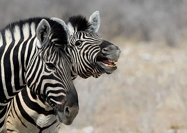 20161011_namibia_0420-640