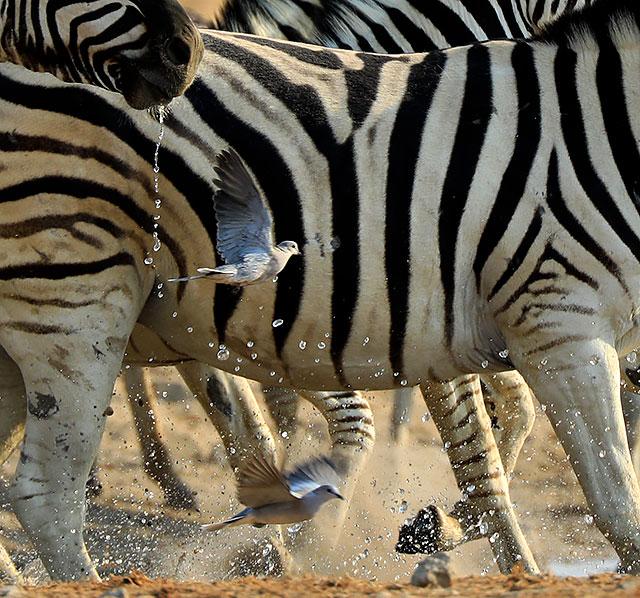 20161012_namibia_0352-640