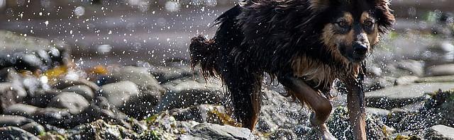 Lösa hundar dödar för nöjes skull